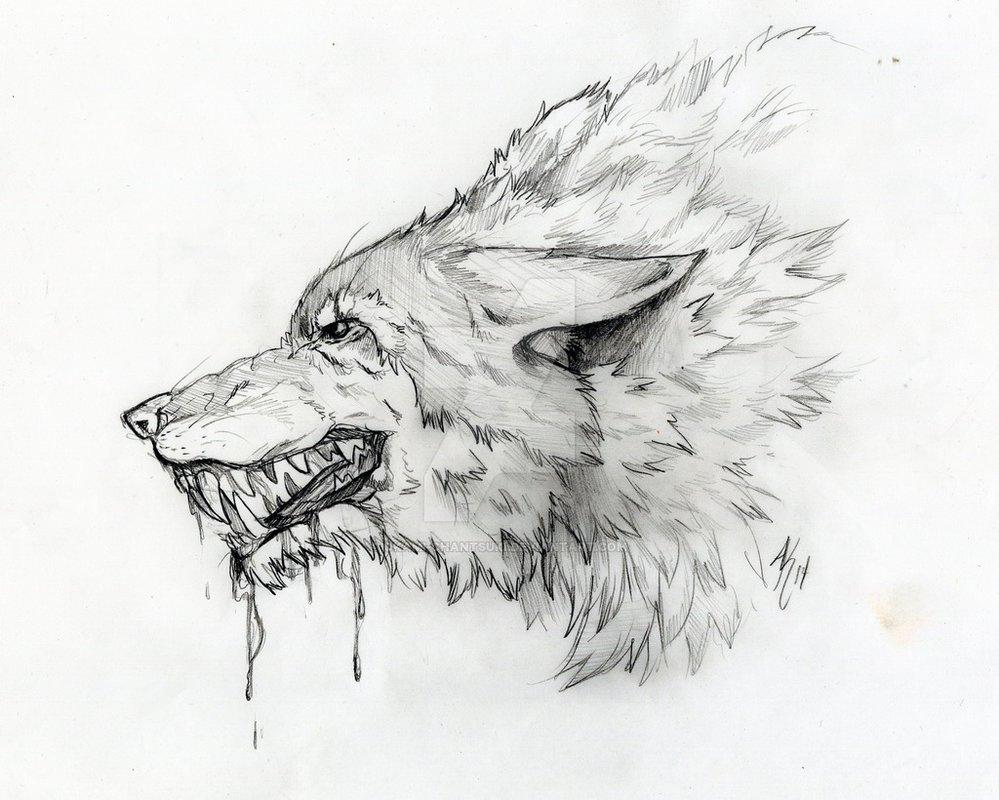 формируется картинки волки черно-белые карандаш воспоминания
