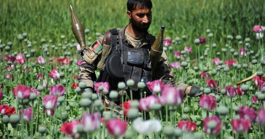 Афганистан мак картинки