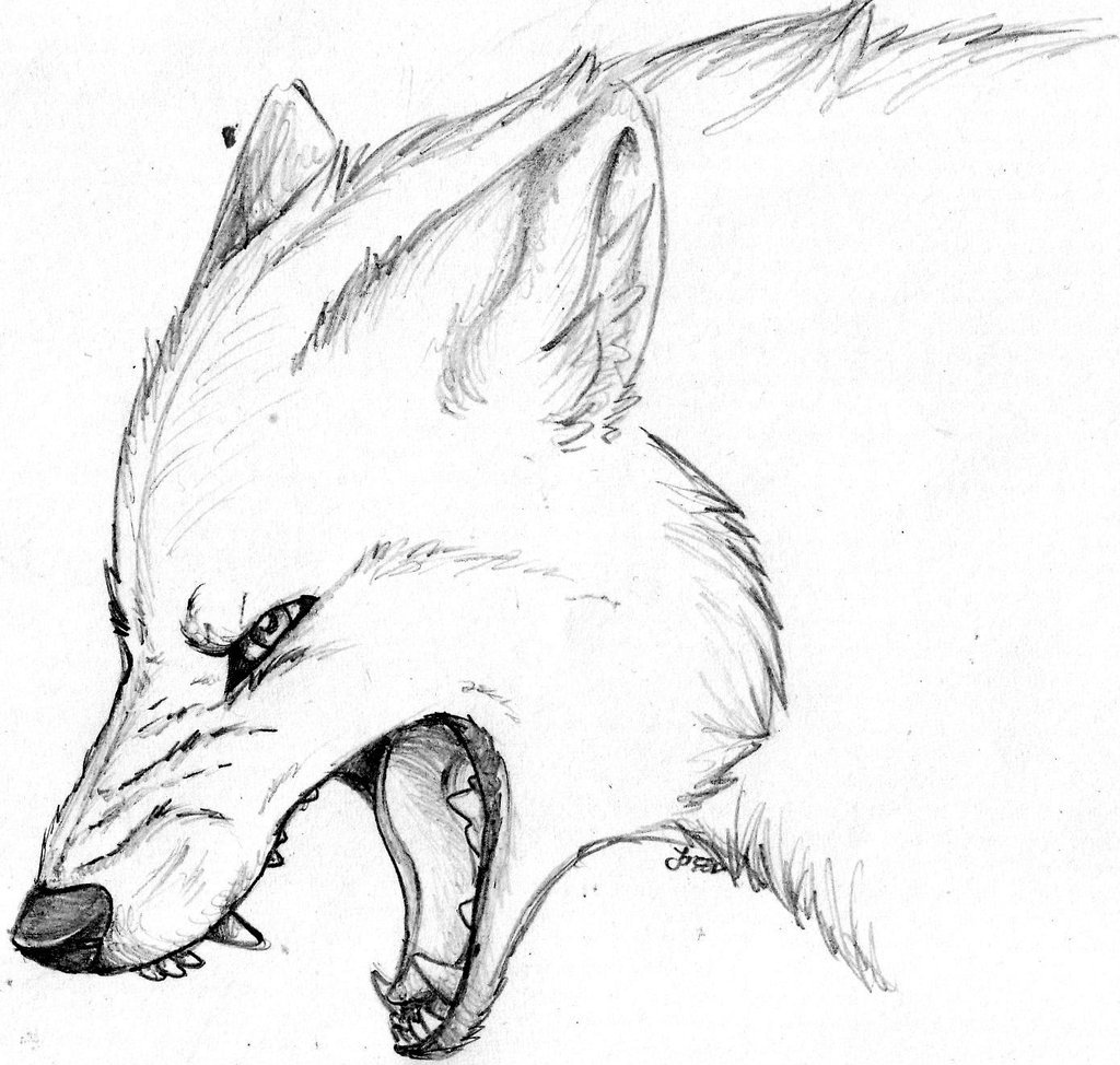 Картинки нарисованного карандашом волка