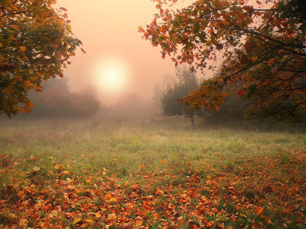 Рассвет в осеннем тумане