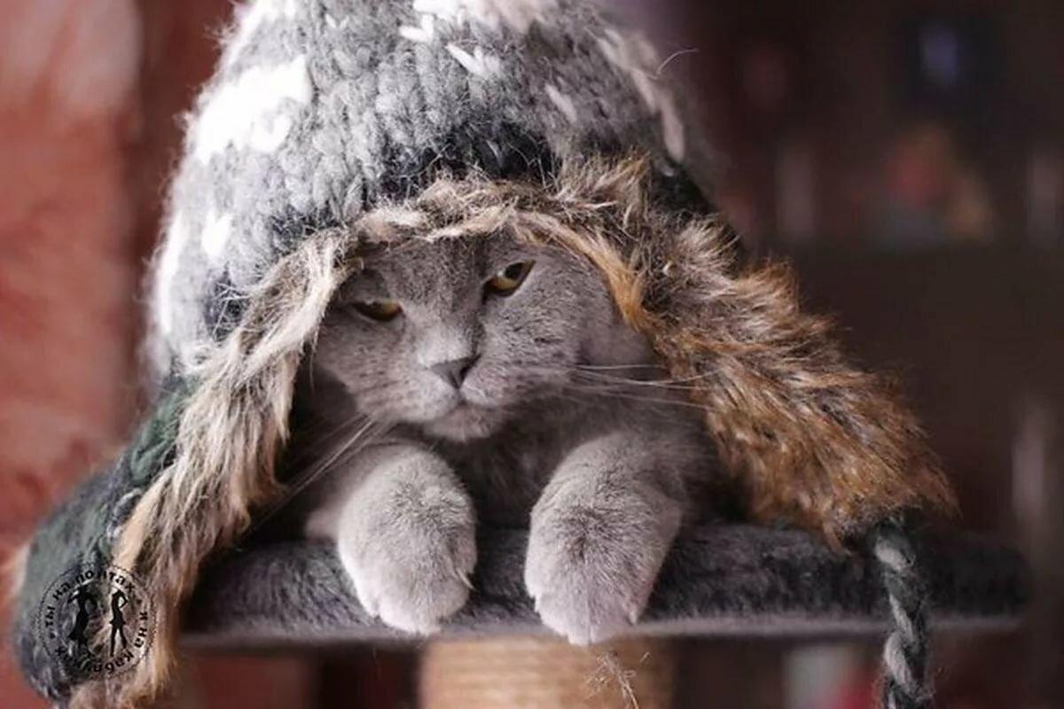 картинка замерзший котенок благодаря наличию денежных