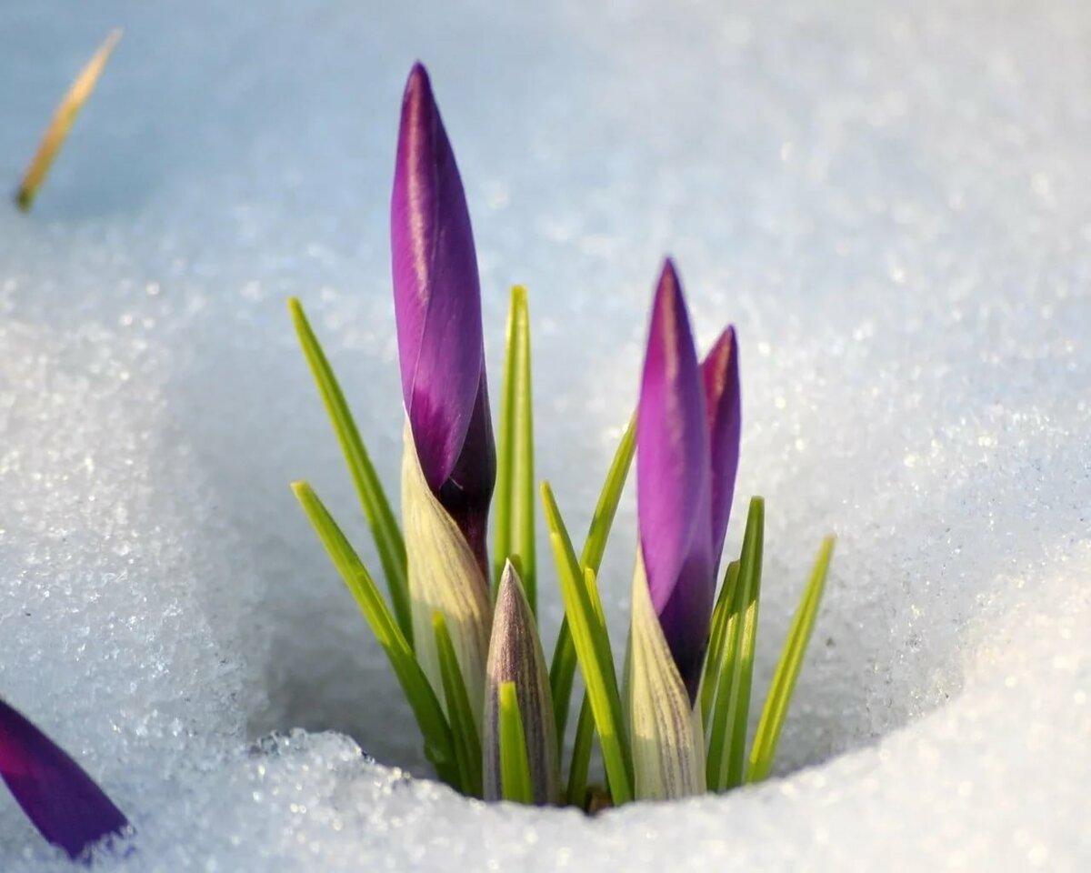 Заставка на компьютер весна картинка