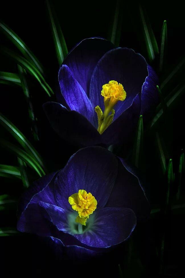 видео красивые картинки весенние цветы в ночи откровенно, злиться
