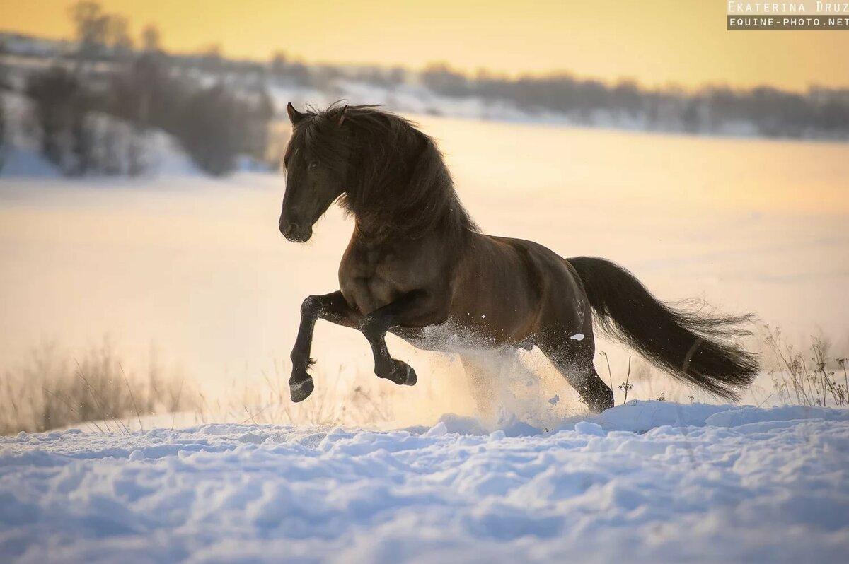 Красивые картинки с лошадьми зимой