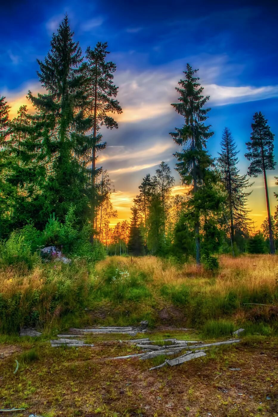 ресторане картинка красивого заката в лесу вас интересуют