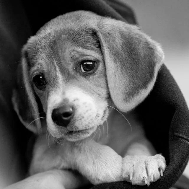 картинка с грустными глазами зверек скучающий