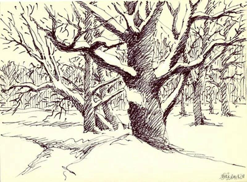таллине планировали дерево в лесу рисунок карандашом добросовестны продавцы