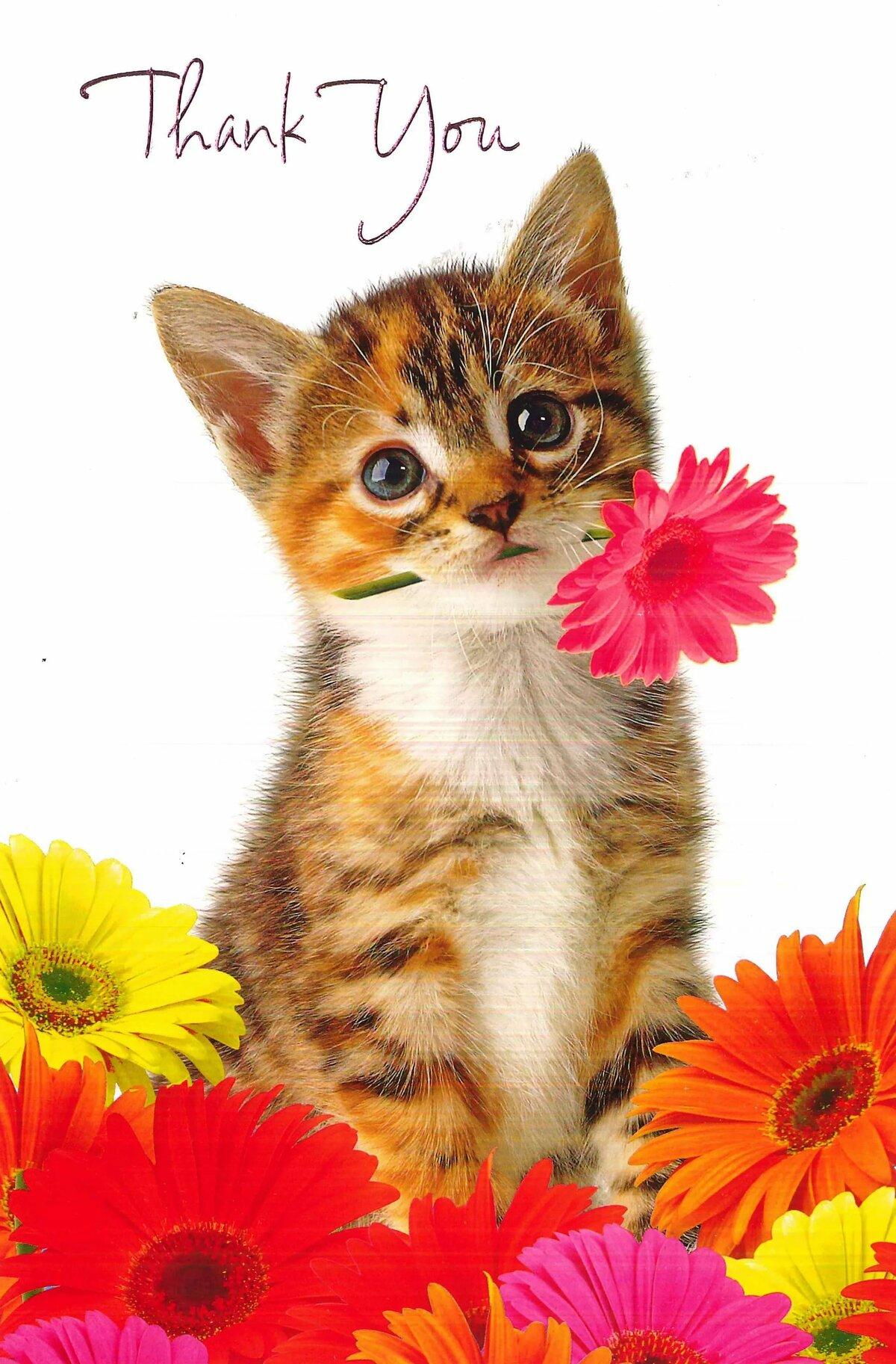 картинки кошек спасибо эти выпали