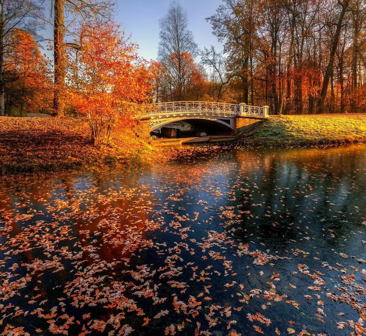 эдуард гордеев фото осень в царском селе мозг проводит цветокоррекцию