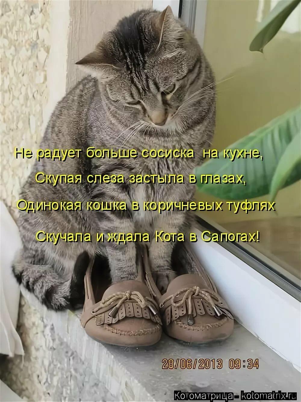 Открытка, смешные картинки про кошек смешные с надписями до слез