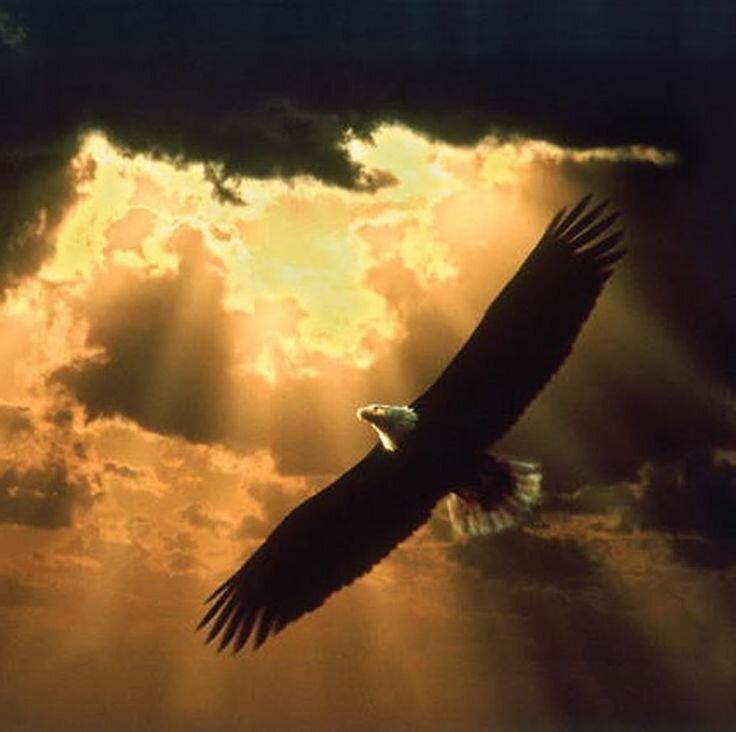 Птица в небе фото на аву