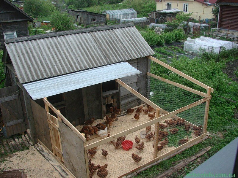 Домашняя мини-ферма во Владивостоке