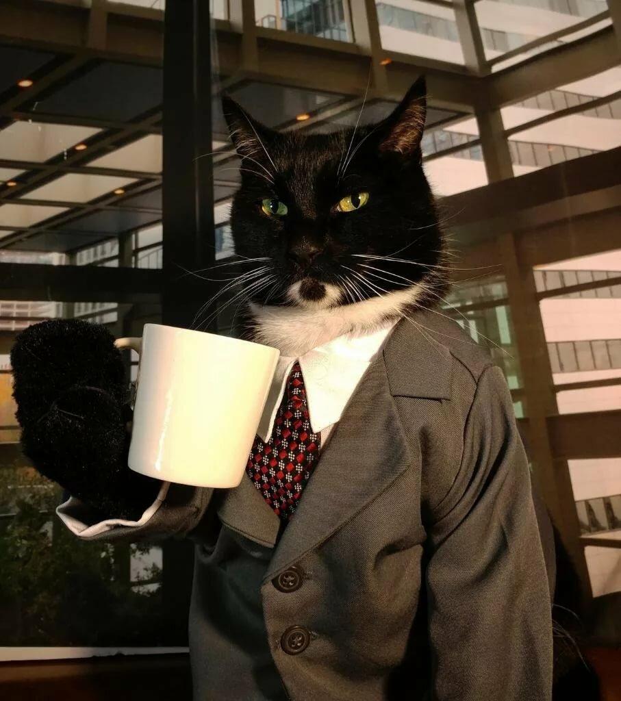 Деловые коты смешные картинки