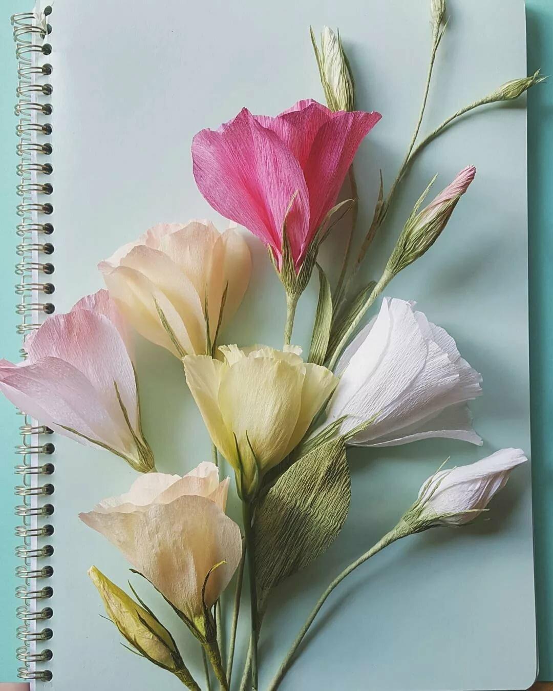 Поздравлением, цветы из гофрированной бумаги на открытку своими руками для начинающих