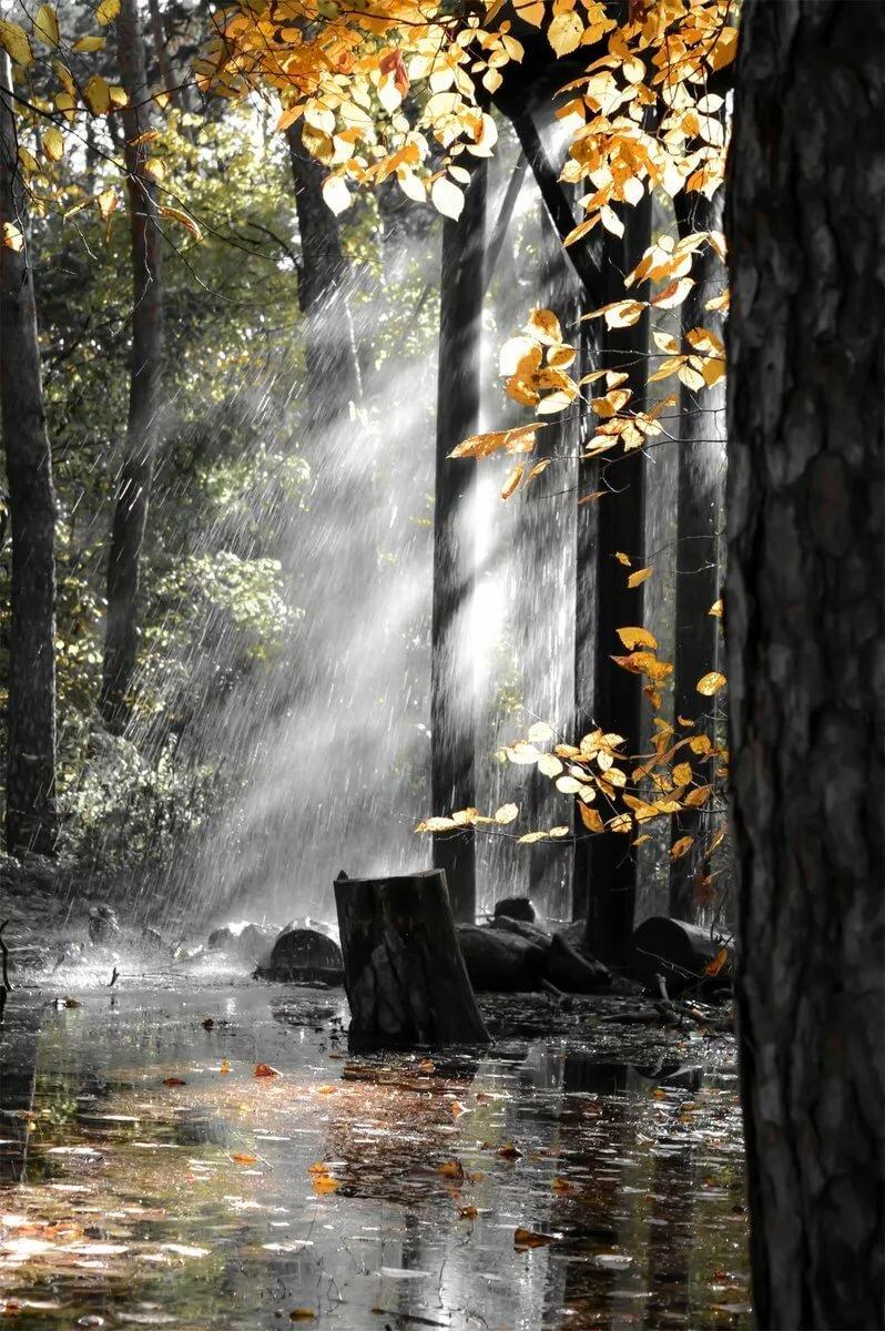 дождь вертикальные картинки красивые фото, именно