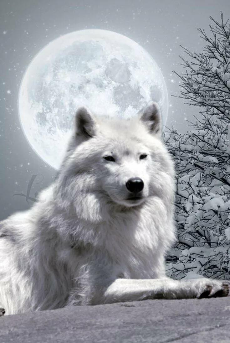 Картинки белых волков с надписью