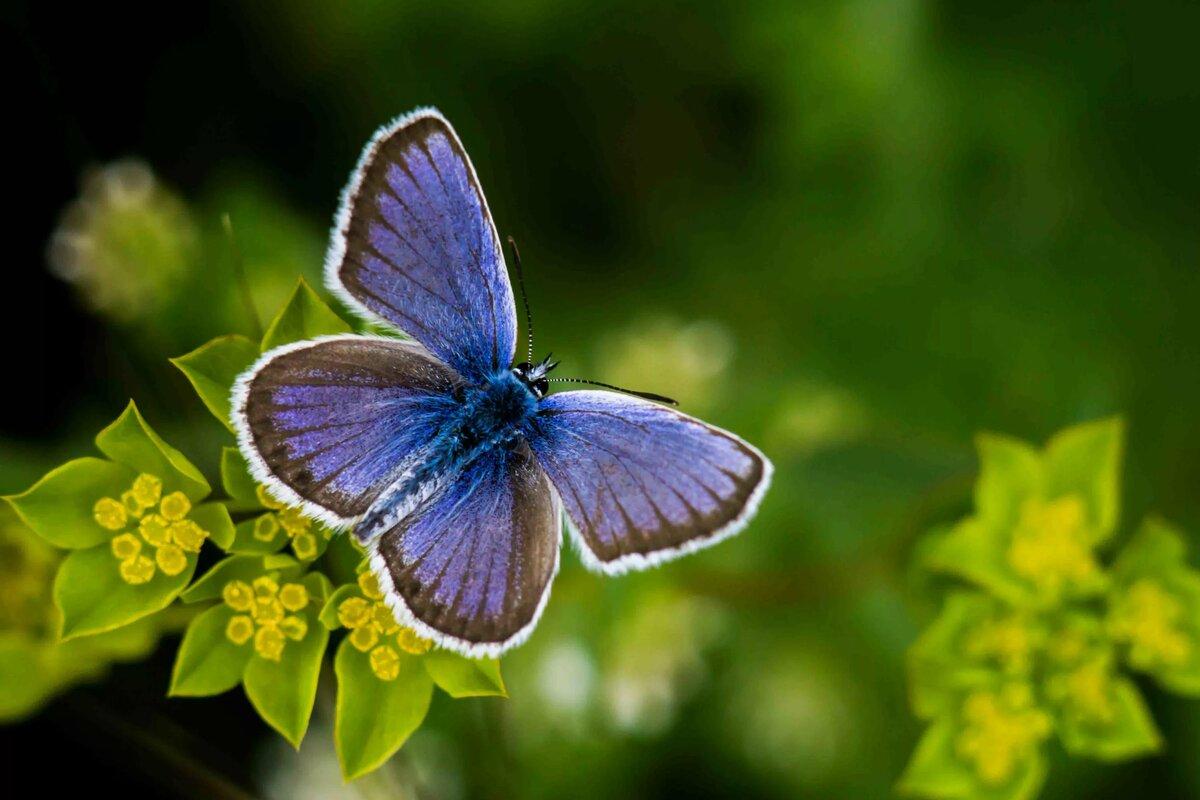 Смотреть картинки маленьких бабочек
