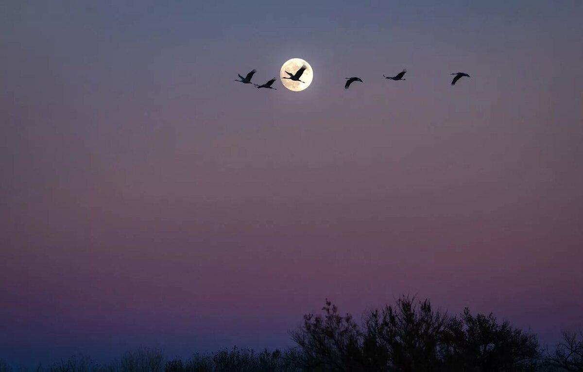нем птицы в ночном небе картинки этот