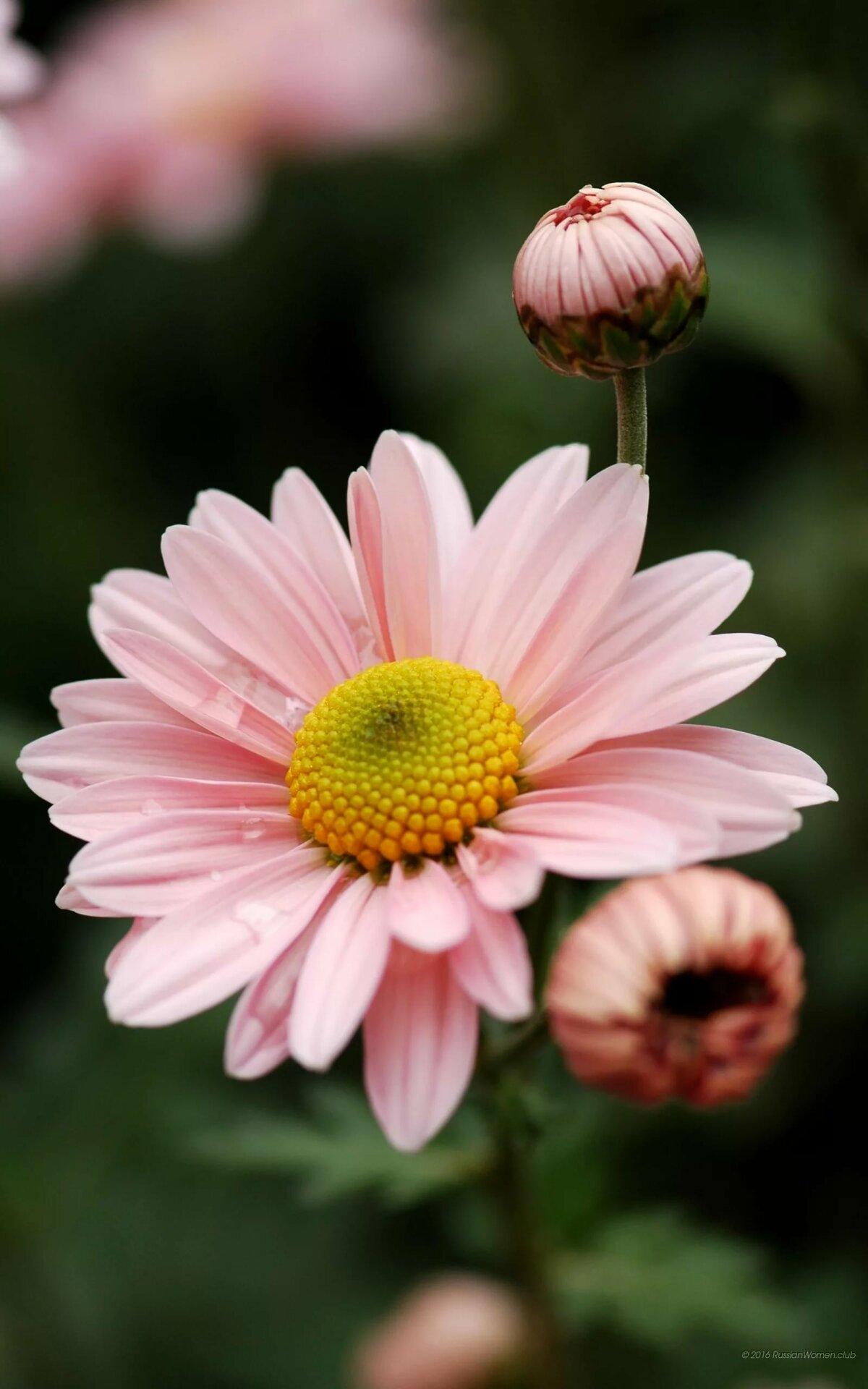 Вертикальные картинки цветы красивые