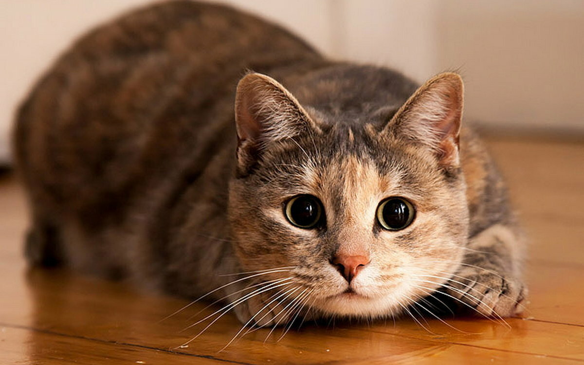 Картинки кошки интересные