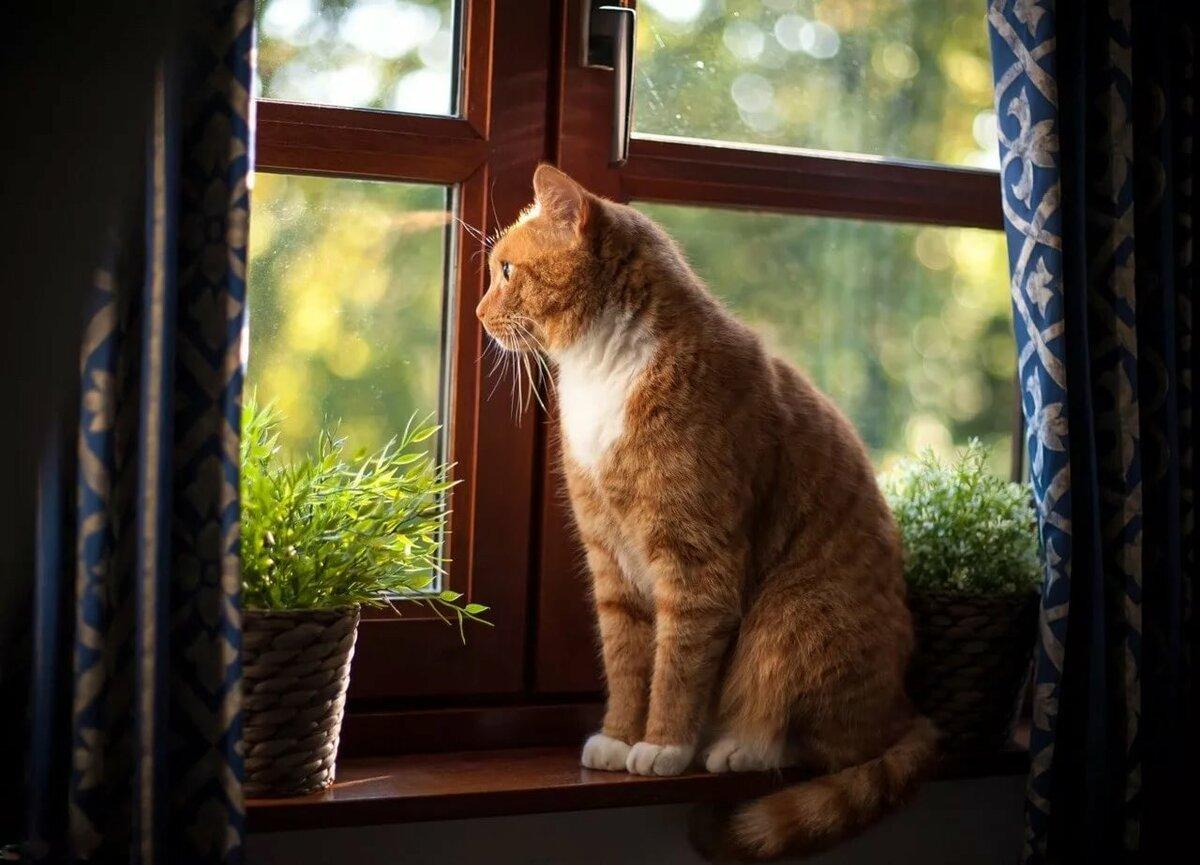 Картинка кошка на окошке