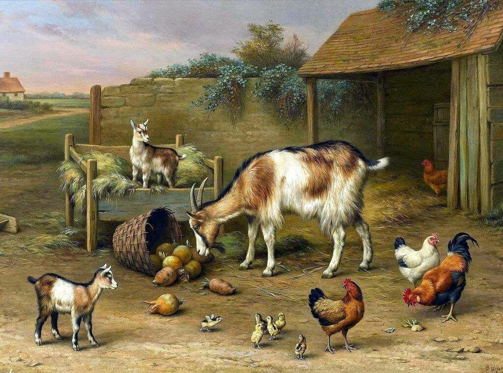 заявил, картинка скотный двор домашние животные нас