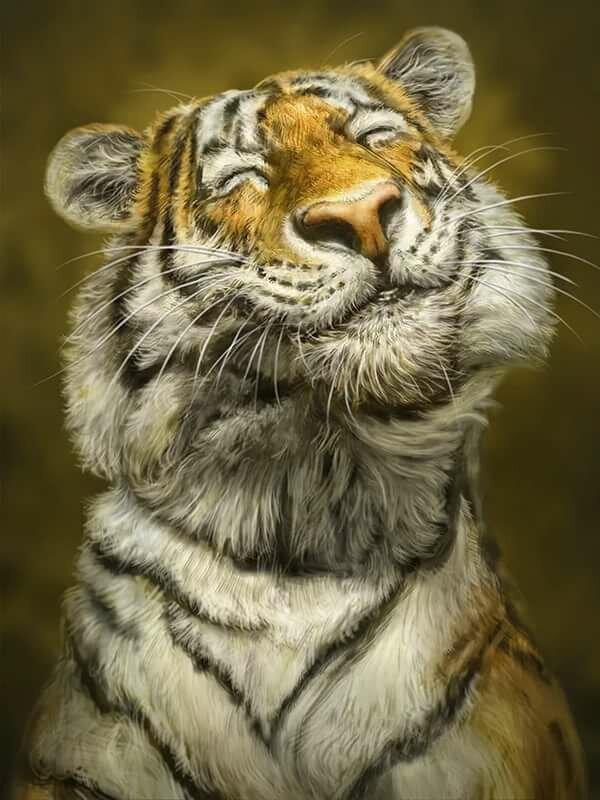 номера прикольные картинки про тигров идет любви двух