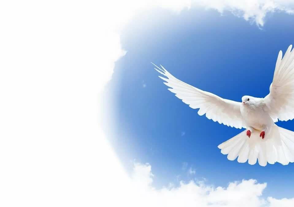 Дети ангелочки, картинки голубка мира