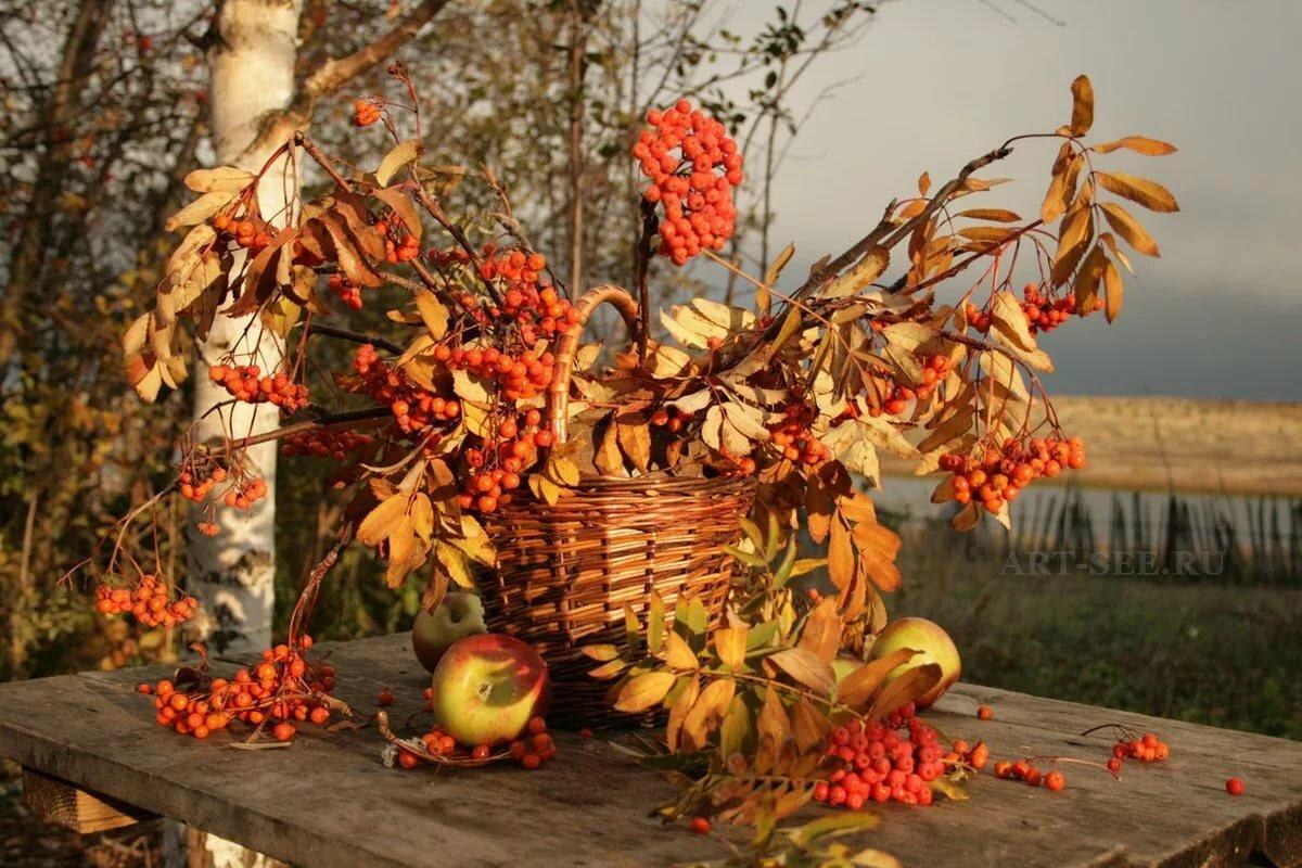 Открытки природа осень осенний натюрморт, дмитрия днем