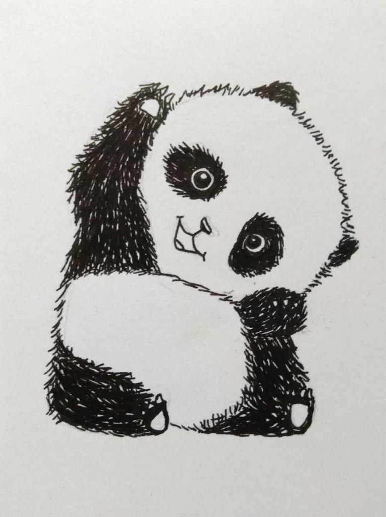 плечо картинки милых панд карандашом зря