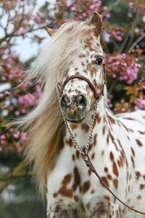 Необыкновенно красивые картинки с лошадьми