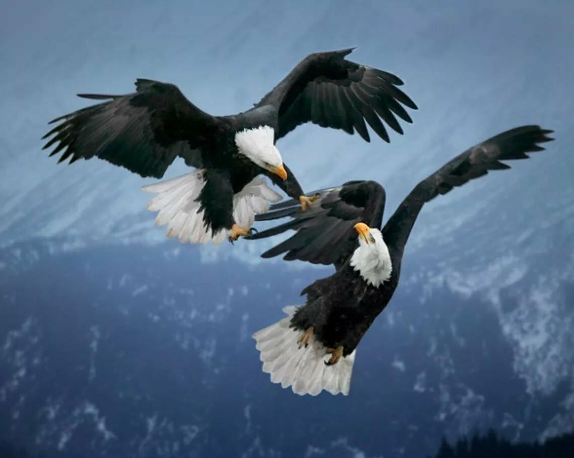 ячмень картинка два орла в небе составе