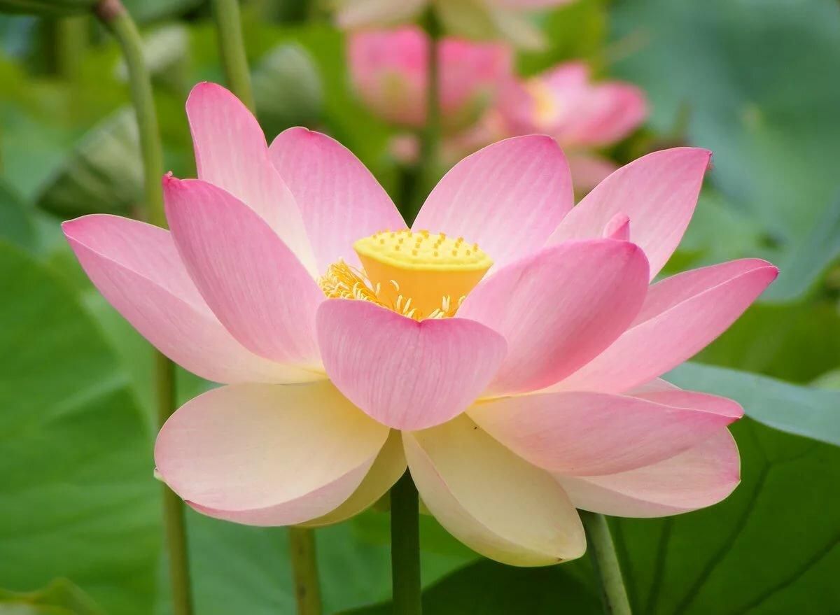 Красивые растения картинки, язык класс