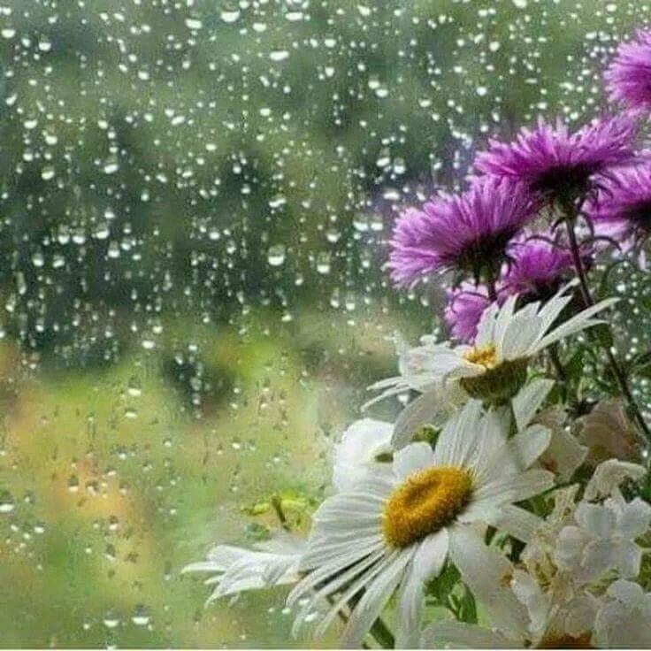 Работаем, доброе утро картинки с дождем летним