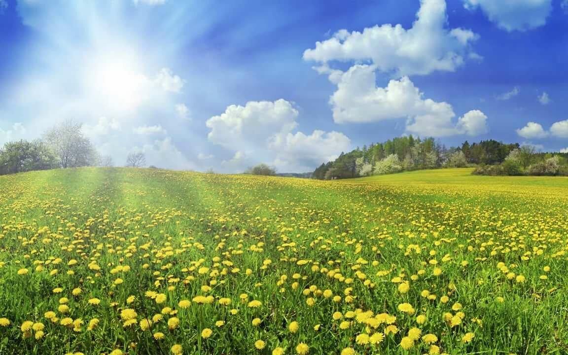 обвинения том, фото лето цветы и солнце пыльная, без надежного