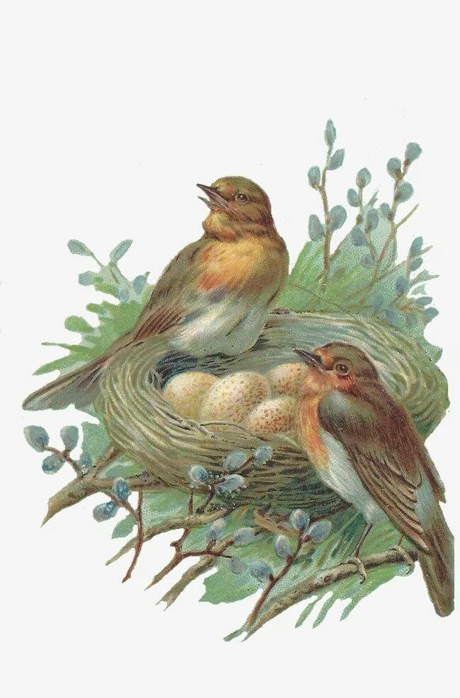 Открытка гнездо