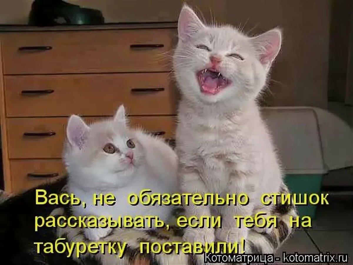 Смотреть смешные картинки до слез про кошек с надписями, молодая