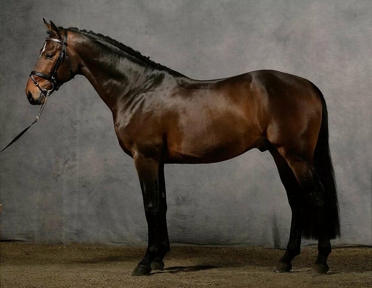 лошади англии картинки можно собрать разобрать