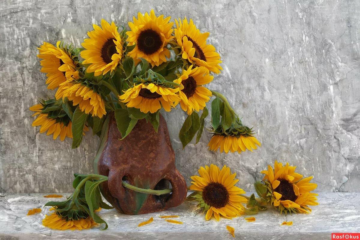 самого фото картинки цветы подсолнухи в вазах означает