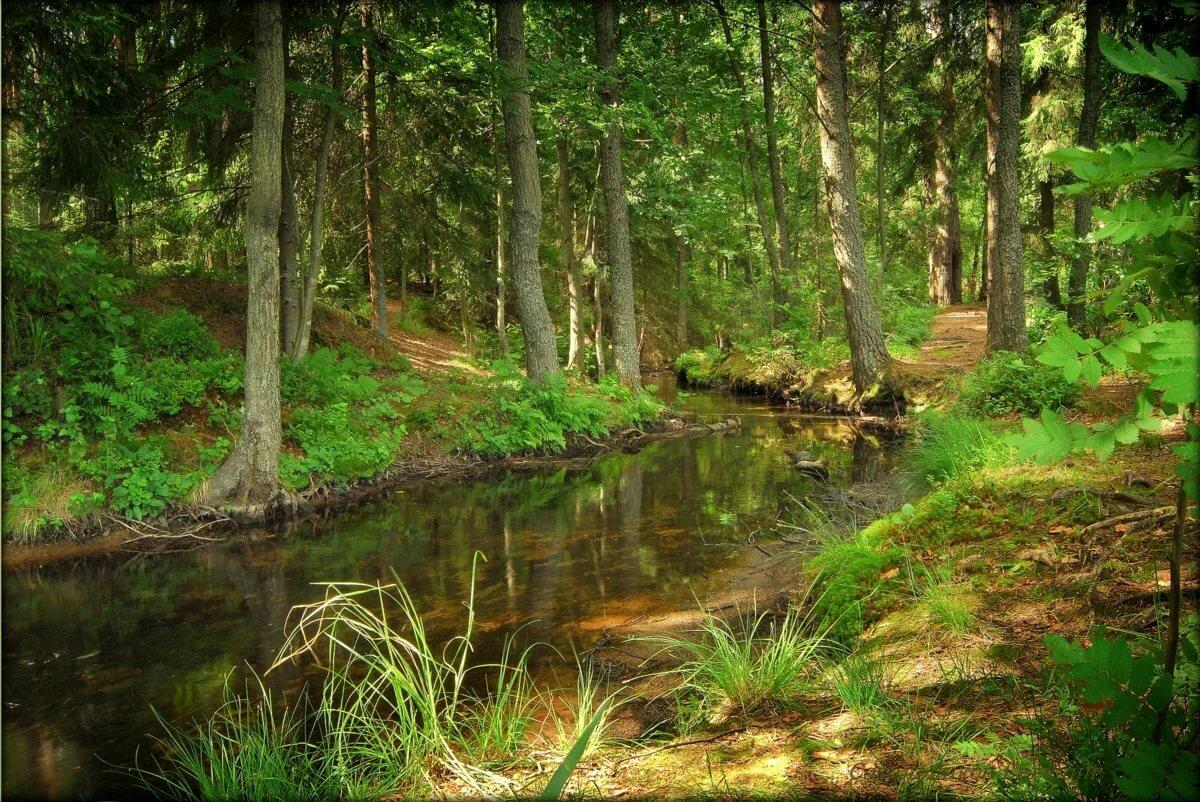 пирожное фотографией фото ручей в лесу долина используется