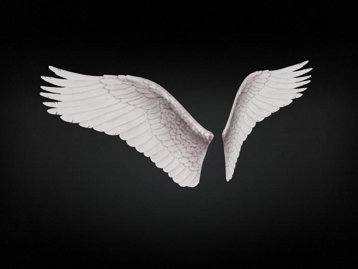 раскрытые крылья ангела картинки пора выложить фото