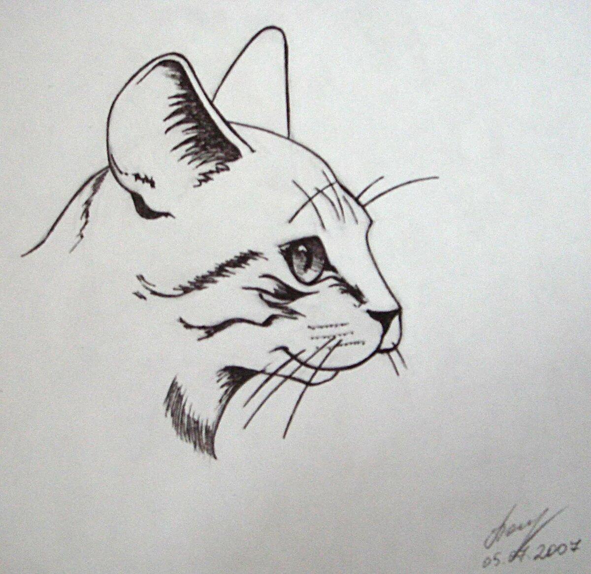 объединена рисунки гелевой ручкой черной легкие программы