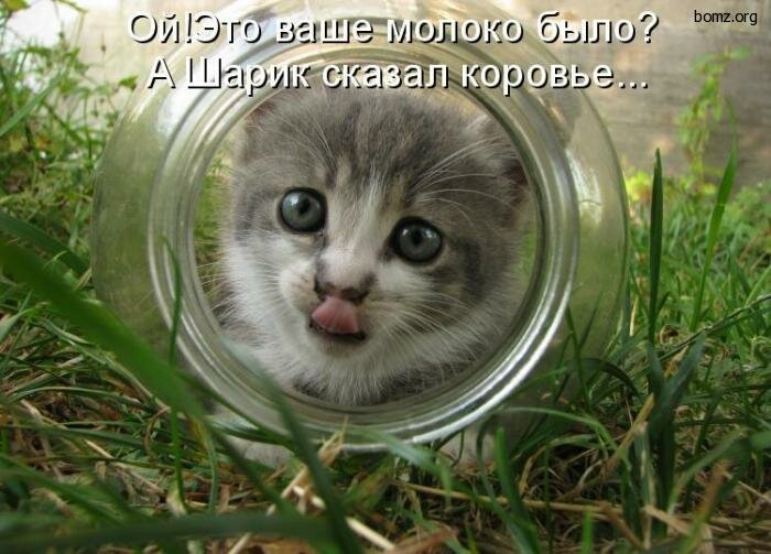 Картинка, картинки котов с надписями прикольными