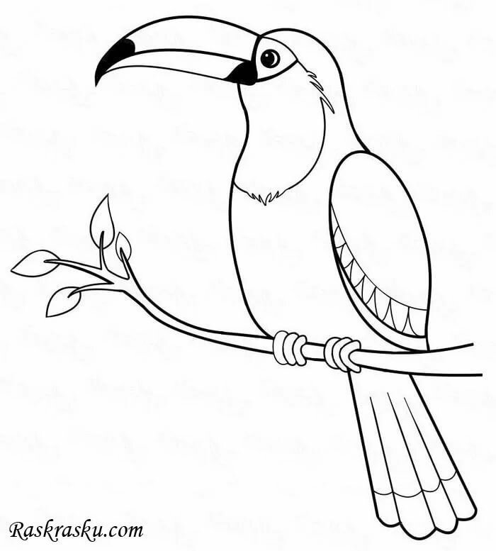 Картинки не раскрашенные птицы