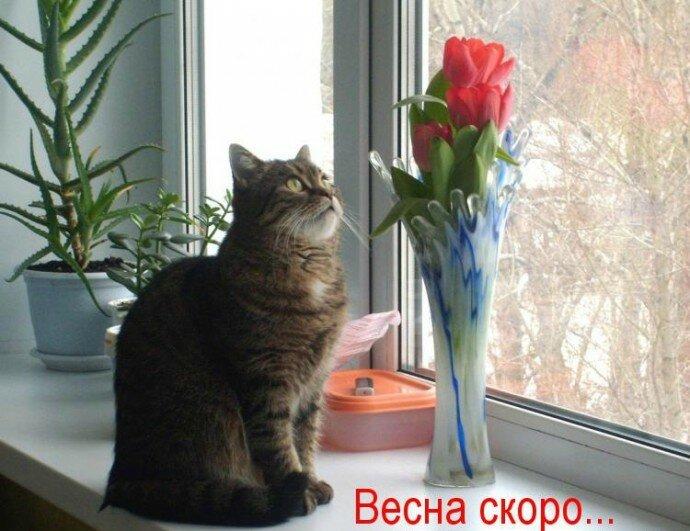 Картинки скорее бы весна пришла