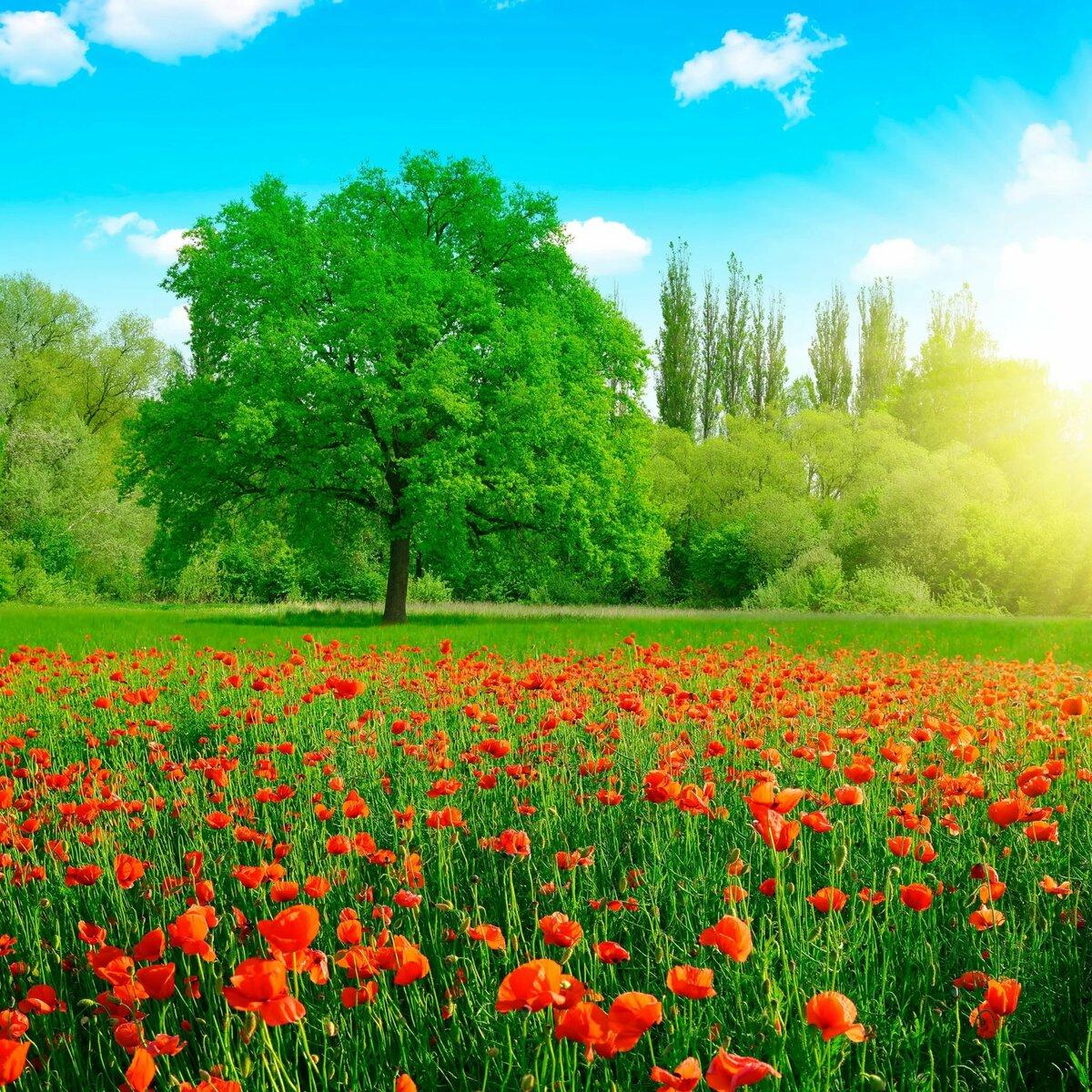 Красивые картинки лето цветы природа