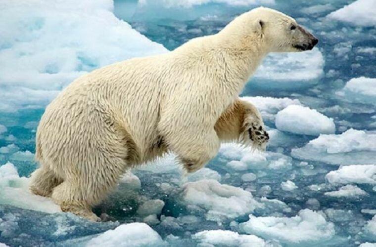 человека зависит, картинка животные арктики и антарктики густой сахарный