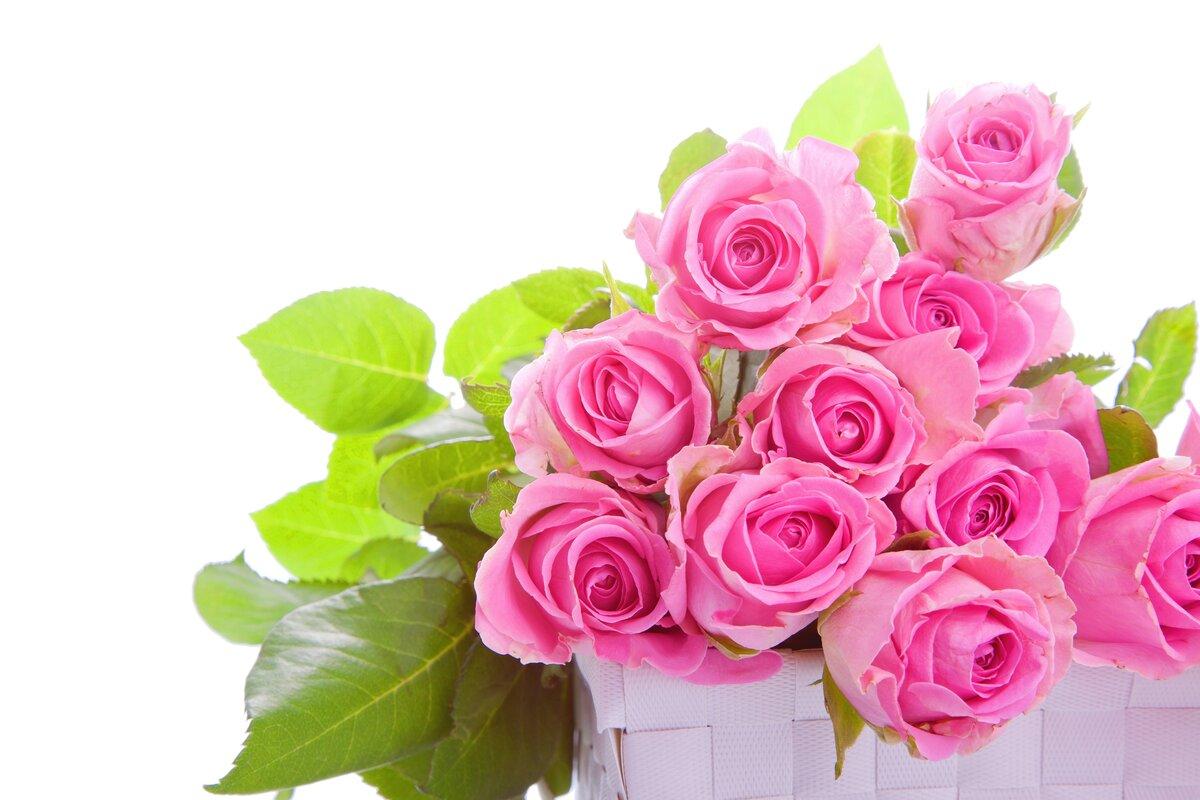 Открытка розовая роза, января татьянин