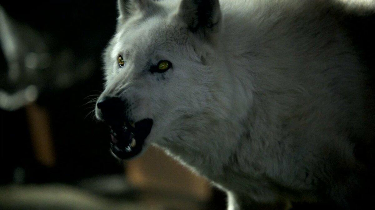 все гифы волки снатпнсью недозрелые плоды