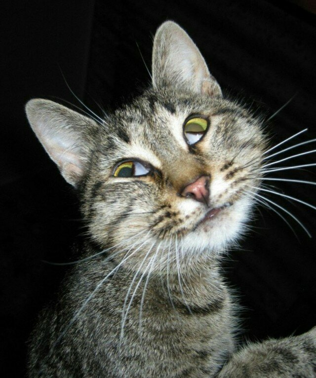 Картинки злых кошек с надписями смешные